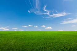 Rice fields, green trees and beautiful sky.