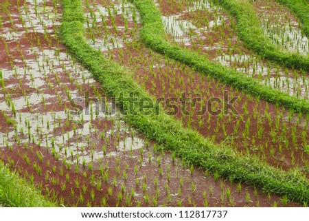 Rice fields in a valley before sunrise on Bali island.