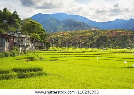 Rice fields in Cordillera mountains, Philippines