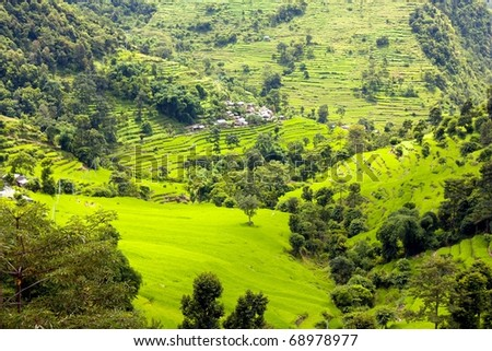 rice fields in Nepal - stock photo