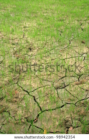 Rice Fields in The area of El Nido on Palawan Island in Philippines - stock photo