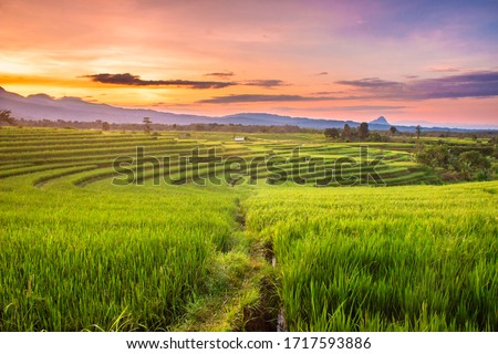 rice fields in the morning with sky sunrise ストックフォト ©