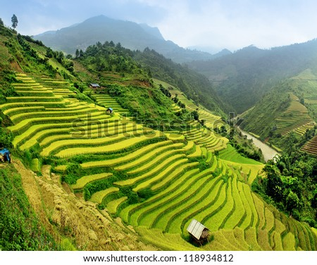 Rice fields Mu Cang Chai Vietnam