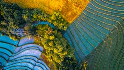 Rice fields of Bali island, Indonesia