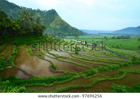 Rice fields on Bali island