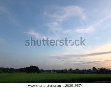 Rice fields on evening #1203519574