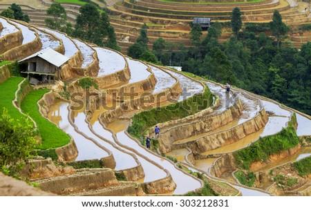 Rice fields on terraced of Mu Cang Chai, YenBai, Vietnam. Rice fields prepare the harvest at Northwest Vietnam #303212831
