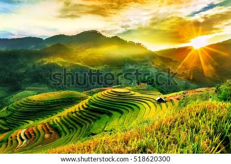 Rice fields on terraced of Mu Cang Chai, YenBai, Vietnam. Vietnam landscapes. ストックフォト ©