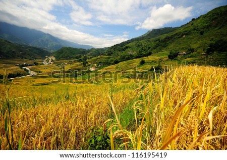 rice fields panorama,Sapa, Vietnam