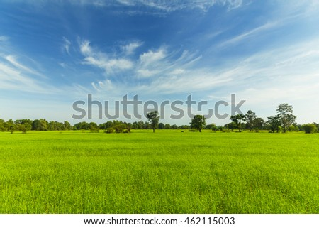 Rice fields with blue sky #462115003