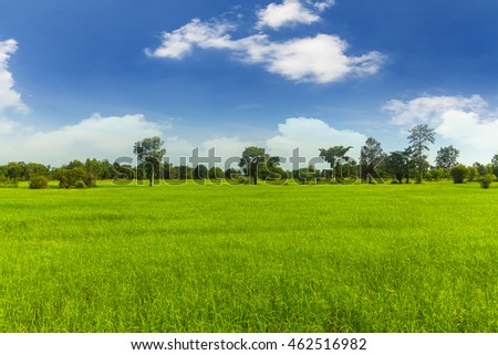 Rice fields with blue sky #462516982