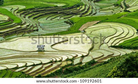Rice filed of terraces , Yen bai, viet nam 8 - stock photo