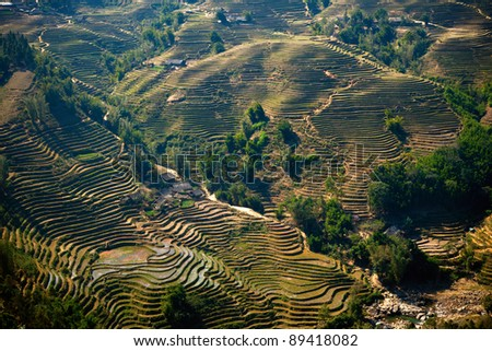 Rice filed terraces at Lao Chai, Sapa, Vietnam