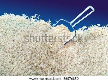Rice Ground