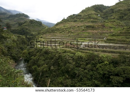 rice growing in the mountainous ifugao rice terraces near banaue in northern luzon in the philippines