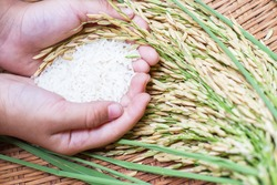 Rice in hand, rice is an important crop in the country.