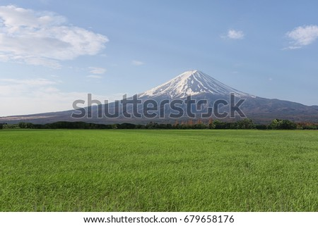 Rice in the rice farming area and have Mount Fuji in the daytime,concept of tourism and landscape.