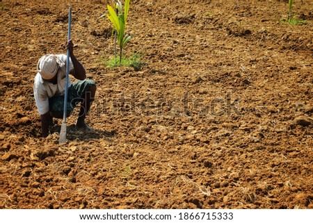 Rice is the major food in India.Farmer're people that work very hard to get rice to Indian people .Everyday they endure from the sun, hot weather and anything else that's made them fals Stock fotó ©
