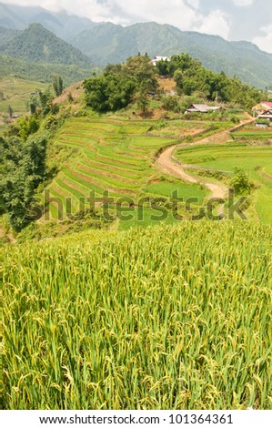 Rice paddies and Terraces in Sapa - stock photo