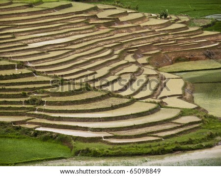 rice Paddy field in Madagascar