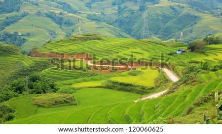 rice plantation with typical houses and communication tower in vietnam - stock photo