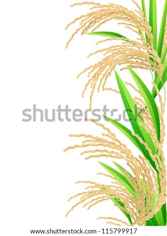 Rice. Spikelet of rice on a white background. Vector illustration.