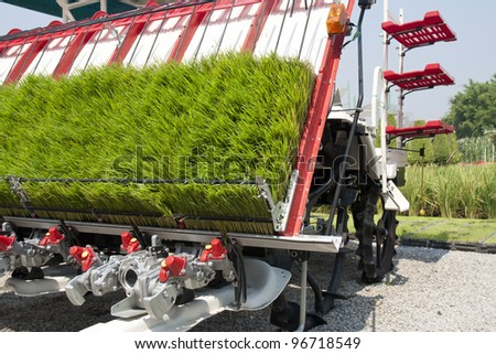 Rice sprouts on planting machine