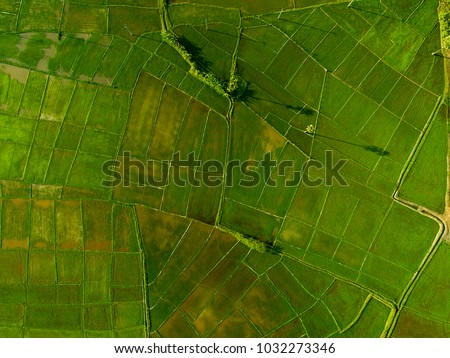 Rice Terrace Aerial Shot. Image of beautiful terrace rice field.