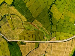 Rice Terrace Aerial Shot. Image of beautiful terrace rice field in Chiang Mai Thailand top view agricultural landscape areas the green and yellow rice fields.