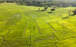 Rice Terrace Aerial Shot. Image of beautiful terrace rice field. Topview