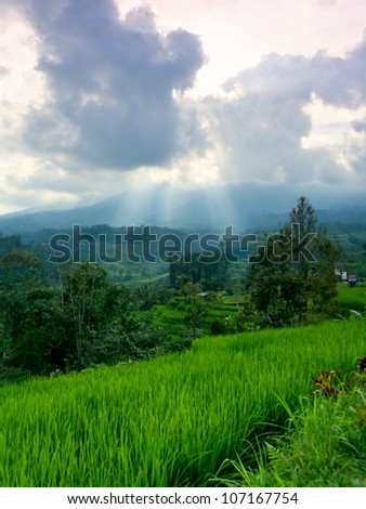 Rice terrace before sunset. Beautiful green rice paddy field in the evening. Sunbeams through the clouds.