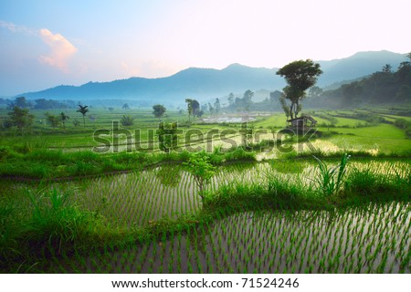 Rice terrace in mountains. Bali. Indonesia