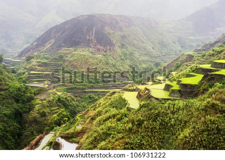 Rice terrace in the rain. Cordillera mountains, Luzon, Philippines