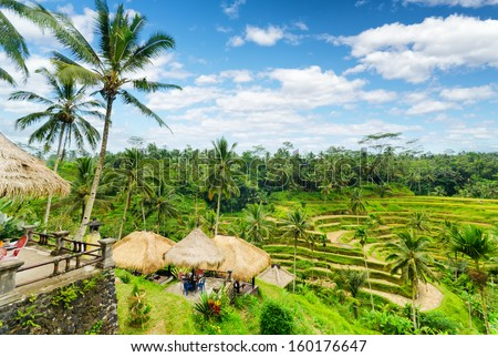 Rice terrace of Bali Island Indonesia
