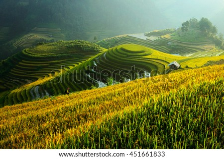 Rice terrace on during sunrise,northeast region of Vietnam #451661833