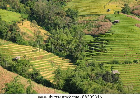 rice terrace on hill, Thailand
