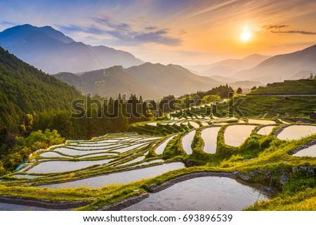 Rice terraces at sunset in Maruyama-senmaida, Kumano, Japan. #693896539