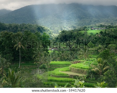 Rice terraces in Balinese mountains