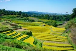 Rice terraces in Chihayaakasaka village