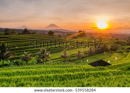 Rice terraces in mountains at sunrise, Bali Indonesia ストックフォト ©