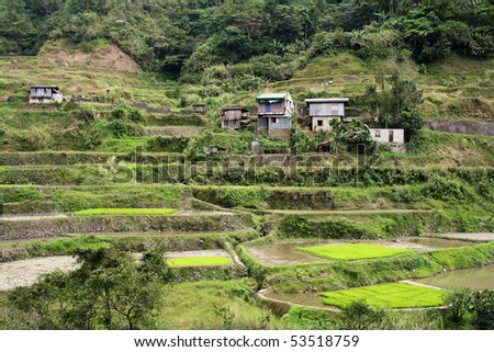 rice terraces in northern luzon the philippines