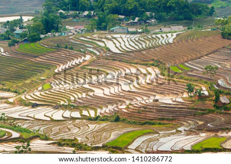 Rice terraces in Sang Ma Sao, Y Ty, Vietnam in watering season. Zdjęcia stock ©