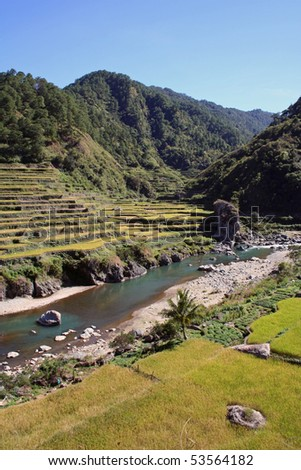 rice terraces near sagada northern luzon the philippines