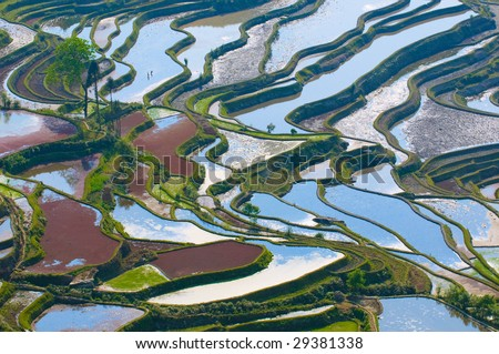 terraces in china. stock photo : rice terraces of