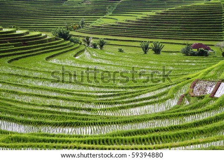 Rice Terraces on Bali  Indonesia