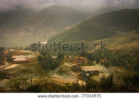 Rice terraces, Sapa, Vietnam