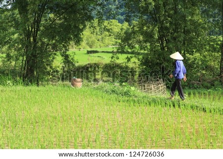 Ricefield Asia