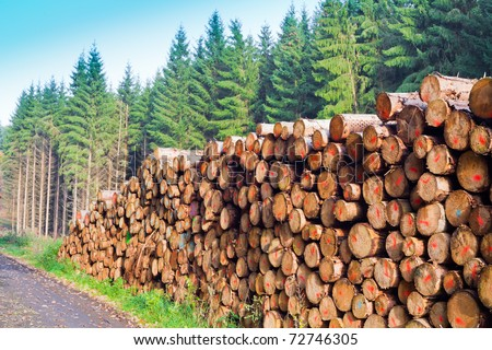 Rich Harvest In Forest Cut Down And Piled Logs Stock