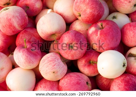 Rich harvest of many ripe red apples closeup view natural background
