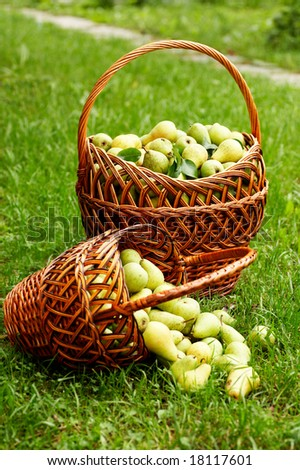 rich harvest. two baskets with plenty of pear